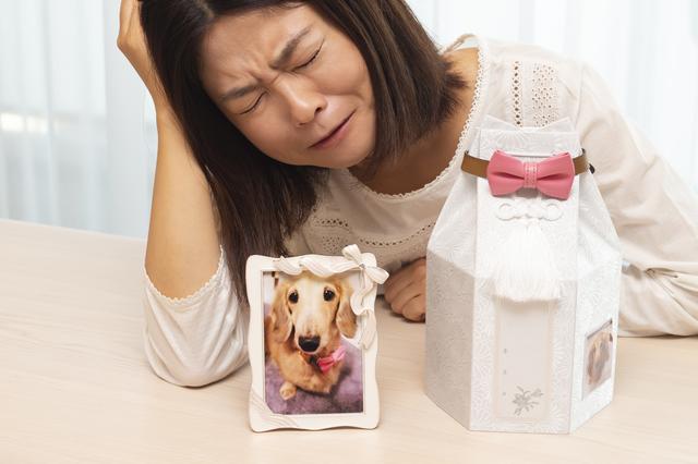 飼い犬が死亡